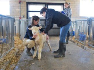обязанности ветеринара на ферме крупного рогатого скота